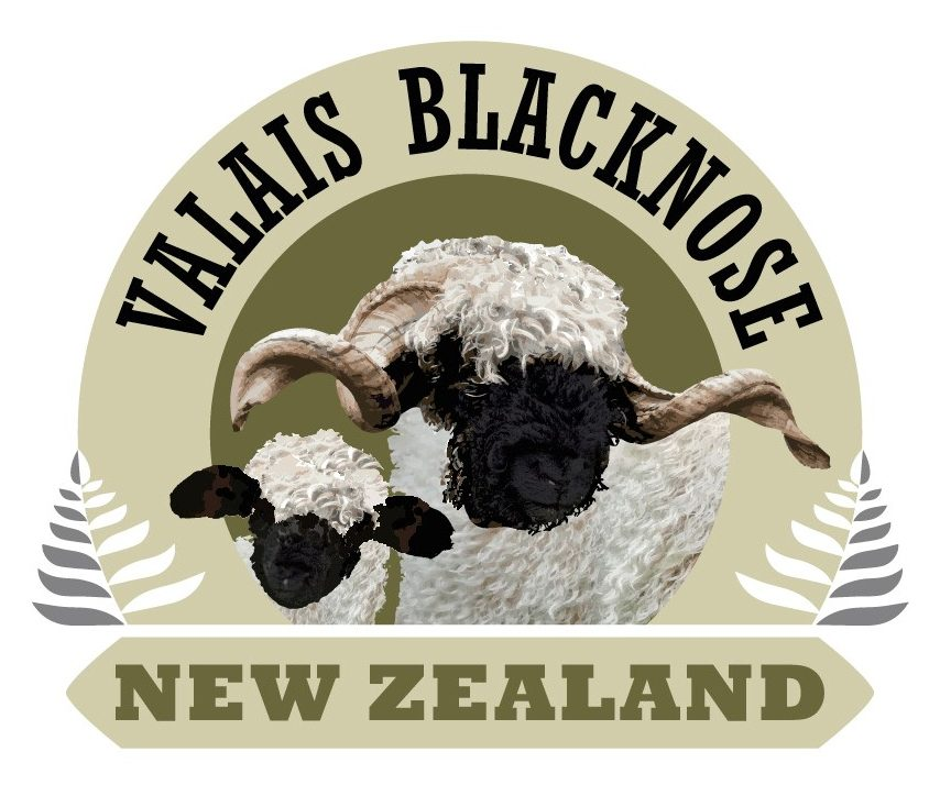 Valais Blacknose New Zealand